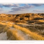 Les dunes du Marquenterre, entre Fort-Mahon et la Baie d'Authie. Saison : Hiver. Lieu : Fort-Mahon, Somme, Picardie, Hauts-de-France, France. The dunes of Marquenterre, between Fort-Mahon and the Bay of Authie. Season: Winter. Location: Fort-Mahon, Somme, Picardy, Hauts-de-France, France.