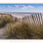 Dunes_Quend_Plage_18_04_2017_011-border