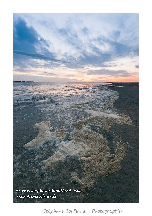 Dépots d'écume de mer à la marée montante en Baie de Somme (Le Crotoy) et au crépuscule. - Saison : été - Lieu : Le Crotoy, Baie de Somme, Somme, Picardie, France