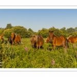 Le marais d'Epagne-Epagnette - vallée de la Somme