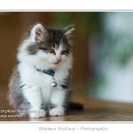 Ficelle, tout jeune chaton femelle. Saison : Automne - Lieu : Marcheville, Somme, Picardie, France