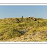 Cavaliers dans les dunes