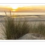 Les dunes entre Fort-Mahon et la baie d'Authie au soleil couchant