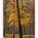 Foret_Crecy_Automne_29_11_2014_0001-border