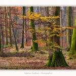 Foret_Crecy_Automne_29_11_2014_0002-border