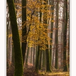 Foret_Crecy_Automne_29_11_2014_0003-border