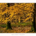Foret_Crecy_Automne_29_11_2014_0004-border
