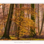 Foret_Crecy_Automne_29_11_2014_0006-border