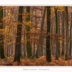 Foret_Crecy_Automne_29_11_2014_0007-border