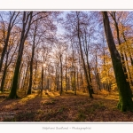 Foret_Crecy_Automne_29_11_2014_0008-border