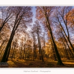 Foret_Crecy_Automne_29_11_2014_0010-border