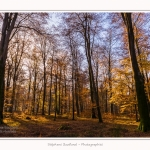 Foret_Crecy_Automne_29_11_2014_0011-border