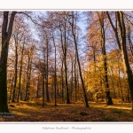 Foret_Crecy_Automne_29_11_2014_0012-border