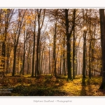 Foret_Crecy_Automne_29_11_2014_0013-border