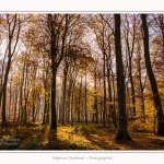 Foret_Crecy_Automne_29_11_2014_0014-border