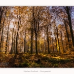 Foret_Crecy_Automne_29_11_2014_0015-border