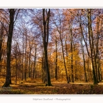 Foret_Crecy_Automne_29_11_2014_0016-border