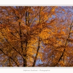 Foret_Crecy_Automne_29_11_2014_0017-border