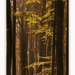 Foret_Crecy_Automne_29_11_2014_0018-border