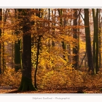 Foret_Crecy_Automne_29_11_2014_0020-border