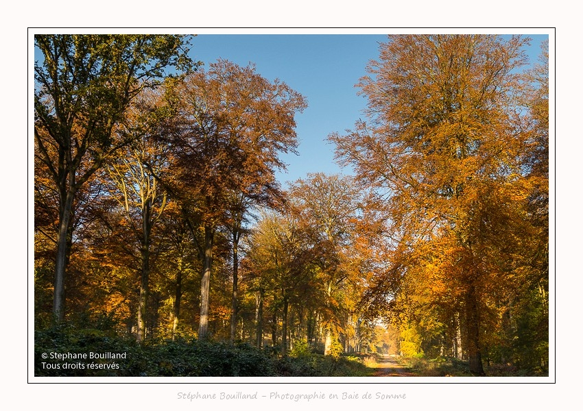 Foret_Crecy_01_11_2016_016-border