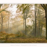 Foret_Crecy_01_11_2016_002-border