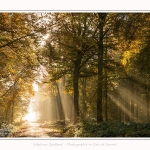 Foret_Crecy_01_11_2016_003-border