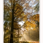 Foret_Crecy_01_11_2016_009-border