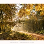 Foret_Crecy_01_11_2016_011-border