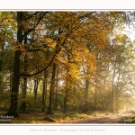 Foret_Crecy_01_11_2016_014-border