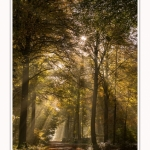 Foret_Crecy_01_11_2016_020-border