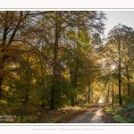 Foret_Crecy_01_11_2016_021-border