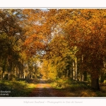 Foret_Crecy_01_11_2016_025-border