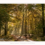 Foret_Crecy_01_11_2016_026-border