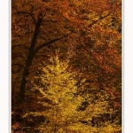 Foret_Crecy_Automne_2014_0001-border