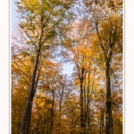 Foret_Crecy_Automne_2014_0002-border