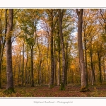 Foret_Crecy_Automne_2014_0003-border