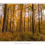 Foret_Crecy_Automne_2014_0004-border