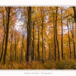 Foret_Crecy_Automne_2014_0005-border