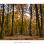 Foret_Crecy_Automne_2014_0006-border