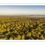 La forêt de Crécy en automne (vue aérienne)