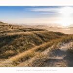 Les dunes du Marquenterre, entre Fort-Mahon et la Baie d'Authie - Saison : Hiver - Lieu : Fort-Mahon, Côte Picarde, Somme, Picardie, Hauts-de-France, France. The dunes of Marquenterre, between Fort-Mahon and the Bay of Authie - Season: Winter - Location: Fort-Mahon, Picardy Coast, Somme, Picardy, Hauts-de-France, France.