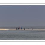 France, Somme (80), Baie de Somme, Le Hourdel, Pirogues indonésienne et canoé-kayak lors des grandes marées; les embarcations viennent attendre le flot et le mascaret à l'entrée de la baie et remontent ensuite aidées du fort courant, parfois accompagnés des phoques; certains échoue leur embarcation sur les bancs de sable pour regarder passer les oiseaux délogés par la marée // France, Somme (80), Bay of the Somme, Le Hourdel, Indonesian canoes and canoe-kayak during high tides; the boats come to wait for the flow and the tidal bore at the entrance of the bay and then go up helped by the strong current, sometimes accompanied by the seals; some fail their boat on the sandbanks to watch the birds dislodged by the tide
