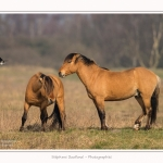 Chevaux_Henson_23_03_2015_004-border.jpg