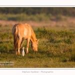 Henson_et_Garde_Boeuf_04_05_2014_001-border