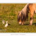 Henson_et_Garde_Boeuf_04_05_2014_002-border