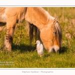 Henson_et_Garde_Boeuf_04_05_2014_015-border