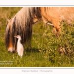 Henson_et_Garde_Boeuf_04_05_2014_020-border