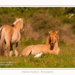 Henson_et_Garde_Boeuf_04_05_2014_022-border