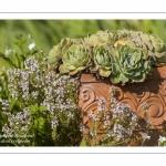 L'Herbarium des remparts à Saint-Valery-sur-Somme (Baie de Somme)